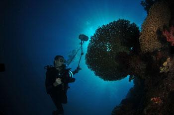 Solo-Diver
