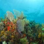 Molasses-Reef