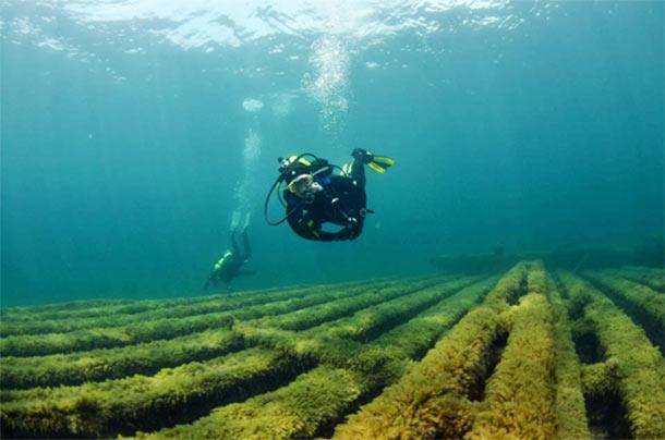 2 wreck divers