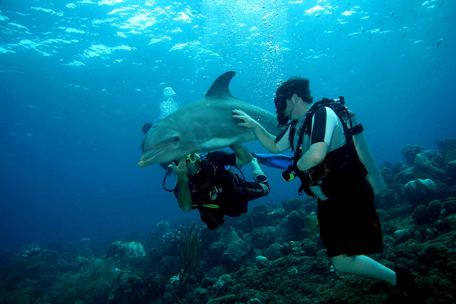 SUDS divers and dolphin