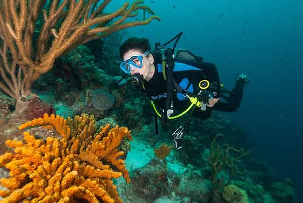 SDI diver