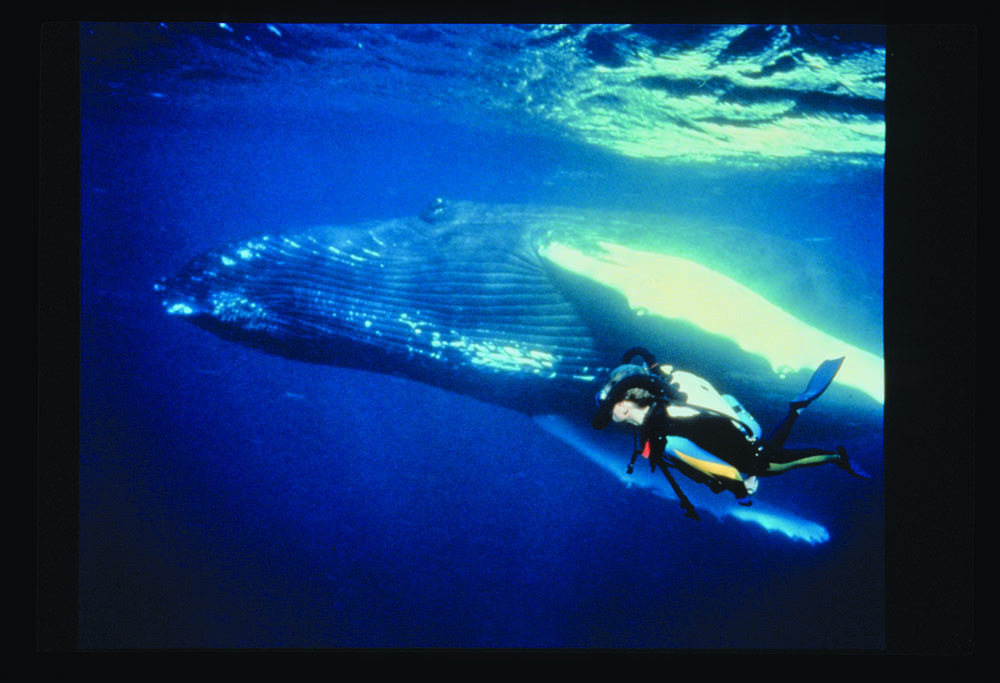 Rebreather diver Lynn Hendrickson and whale