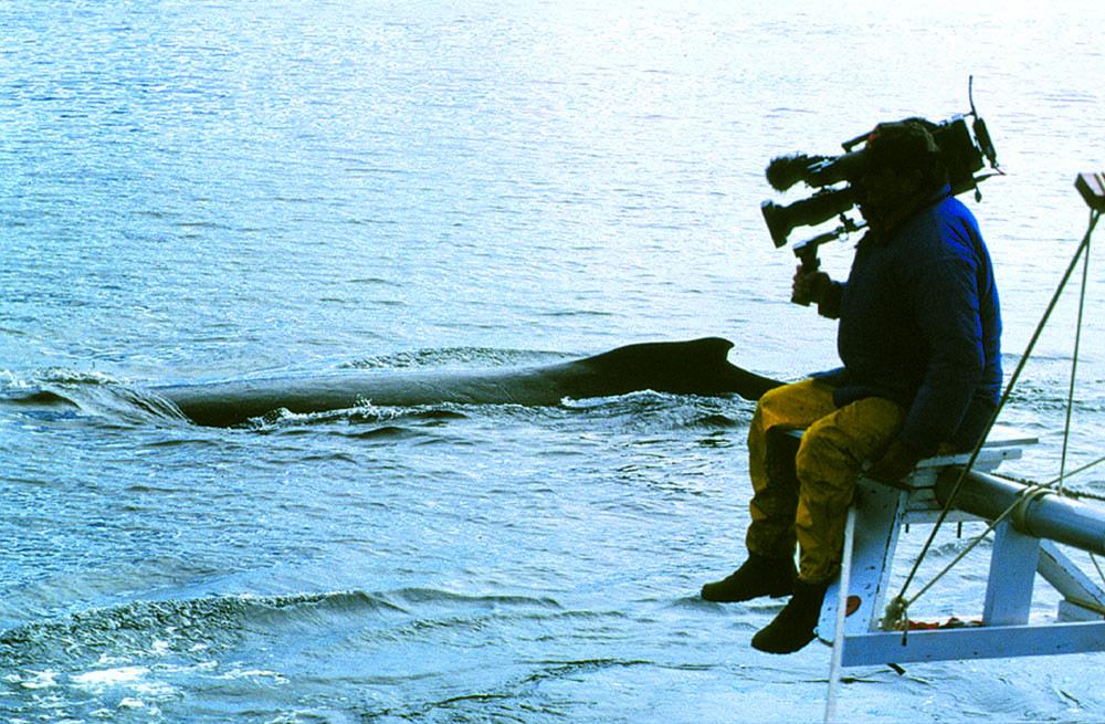 Filming humpback whales in Alaska