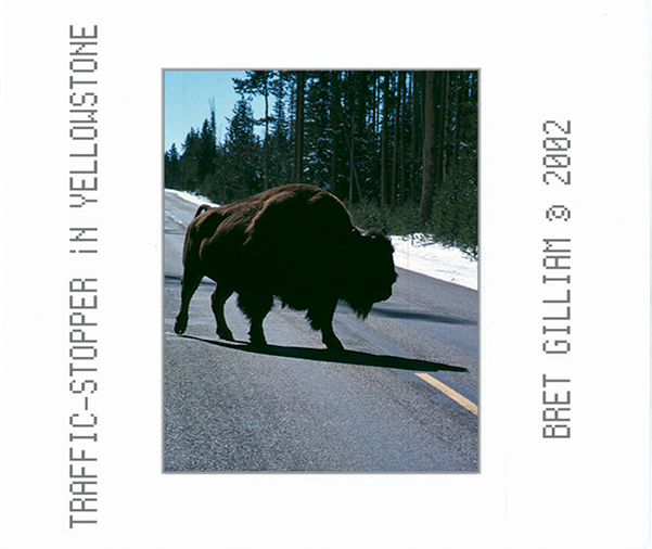 "Bret Gilliam "" Traffic Stopper in Yellowstone"""