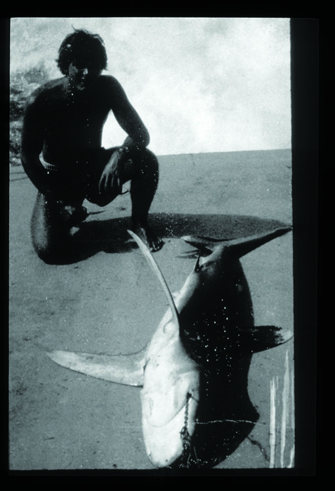 Gilliam and Oceanic Whitetip, hooked during diver's decompression, aboard Navy ship in Virgin Islands, January 1971