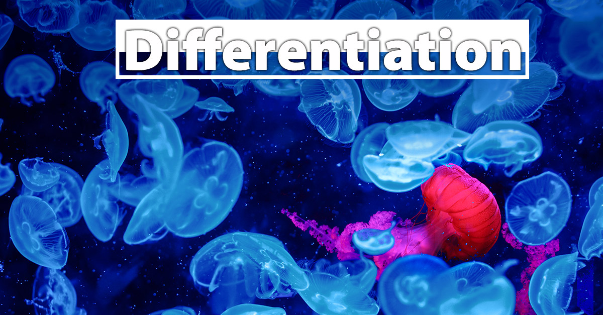 jelly-fish-differentiation