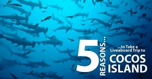 5-Reasons-to-Take-a-Liveaboard-Trip-to-Cocos-Island