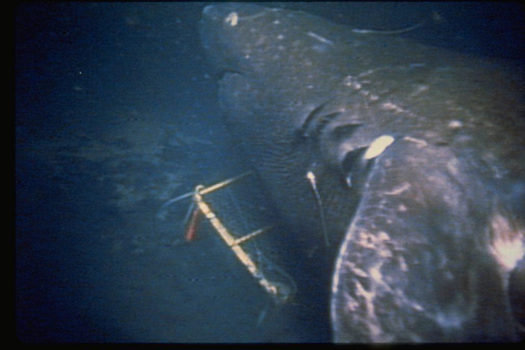 emory kristof shark