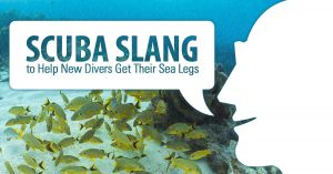 Scuba-Slang-to-Help-New-Divers-Get-Their-Sea-Legs