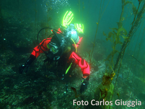 scuba diver with red dry suite and yellow fins by Carlos Giuggia
