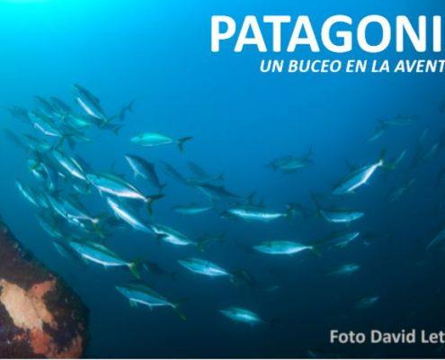 patagonia un buceo con pescado y coral David Letilier photo