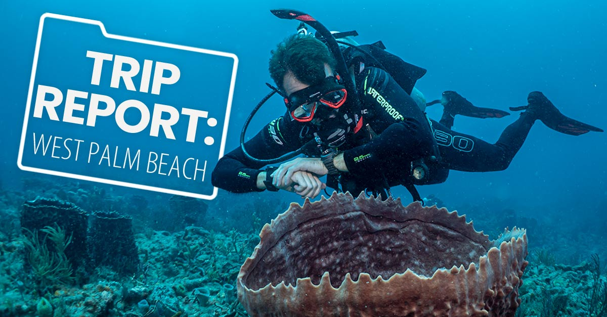 west palm beach diving